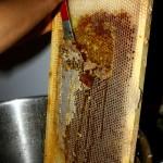 utilisation de vieux miel pour nourrir les abeilles, en manque de fleurs