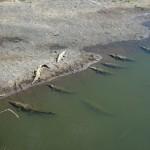 crocos au bord de l'eau, méfiance lorsqu'il faut camper!