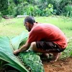 Tressage d'une feuille de palmier