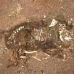 de quel epoque dates ces ossements? mystere...